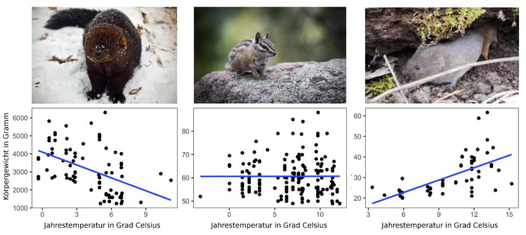 Beispiele dreier Tiere mit verschiedenen Abhängigkeiten Gewicht-Jahrestemperatur