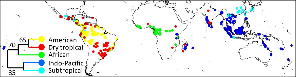 Feineinteilung der Tropenwälder und ihre heutige Verteilung.