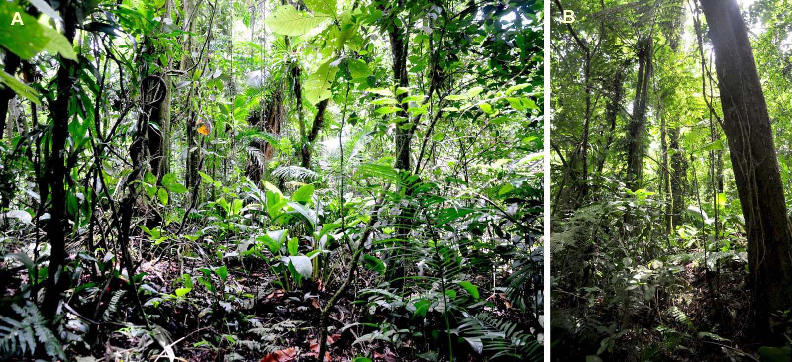 Wald am Fundort der Frösche