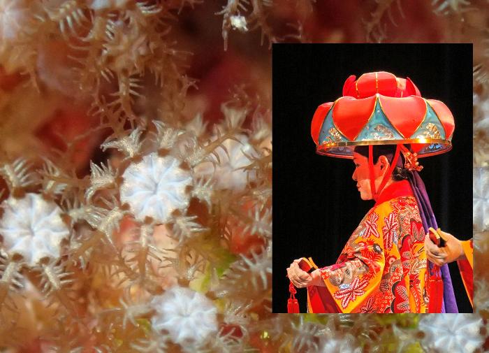 Hanagasa Koralle Hana hanagasa  und Tänzer mit traditioneller Kopfbedeckung Hanagasa