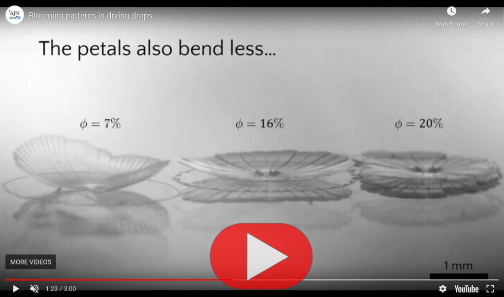 Video-Screenshot Blütenmuster in trocknenden Tropfen. Gewinner Milton Van Dyke-Preis 2019.