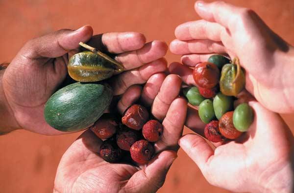 Pflanzliche Nahrung aus dem Australischen Busch.