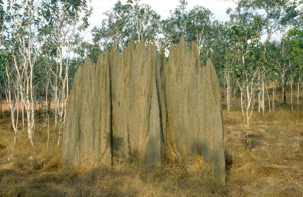 Termitenhügel im Arnhemland