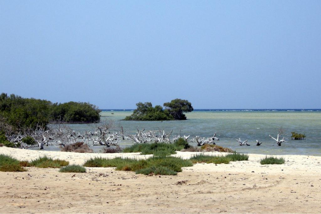 Blick vom Sandstrand auf das Meer. Kleine Bäume und Sträucher säumen die Küste. Mangroven.
