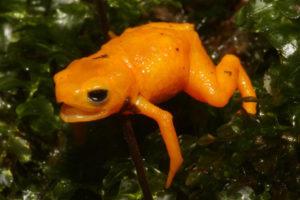 Orangefarbener Frosch auf Pflanzen